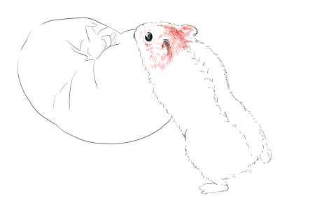 簡単イラストの描き方-ハムスターの書き方10