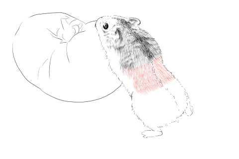 簡単イラストの描き方-ハムスターの書き方15
