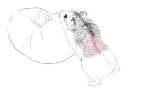 簡単イラストの描き方-ハムスターの書き方16