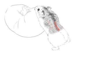 簡単イラストの描き方-ハムスターの書き方17