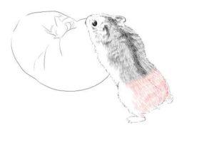簡単イラストの描き方-ハムスターの書き方18