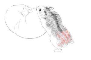 簡単イラストの描き方-ハムスターの書き方19