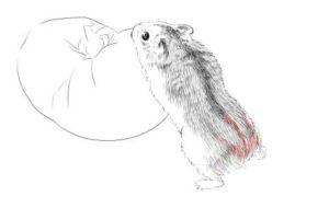 簡単イラストの描き方-ハムスターの書き方20