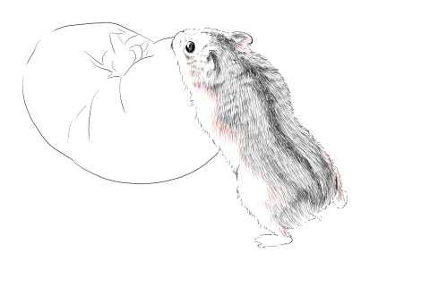 簡単イラストの描き方-ハムスターの書き方21