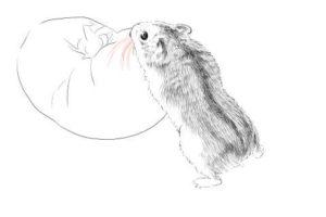 簡単イラストの描き方-ハムスターの書き方22