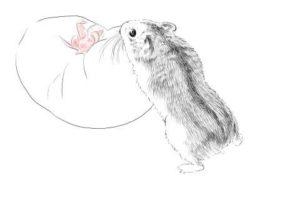 簡単イラストの描き方-ハムスターの書き方23