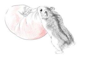 簡単イラストの描き方-ハムスターの書き方24