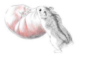 簡単イラストの描き方-ハムスターの書き方26