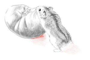 簡単イラストの描き方-ハムスターの書き方27