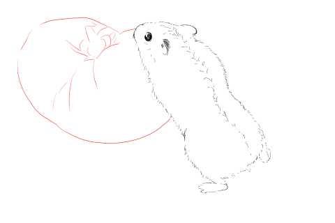 簡単イラストの描き方-ハムスターの書き方9