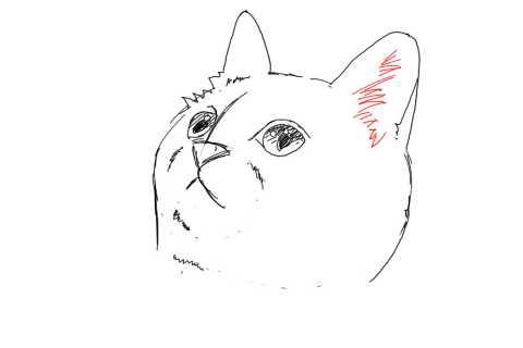 簡単イラストの描き方-子猫の書き方17