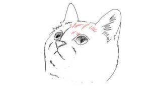 簡単イラストの描き方-子猫の書き方18