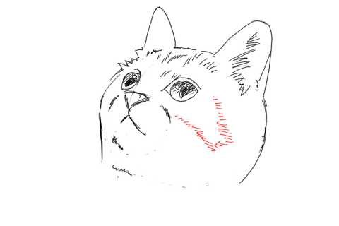 簡単イラストの描き方-子猫の書き方20