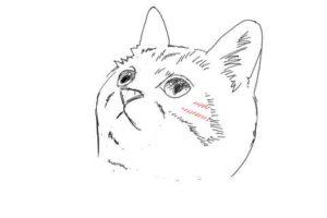 簡単イラストの描き方-子猫の書き方21
