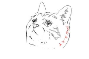 簡単イラストの描き方-子猫の書き方23