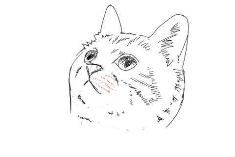 簡単イラストの描き方-子猫の書き方24