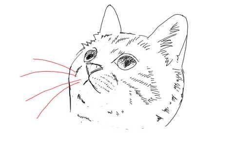 簡単イラストの描き方-子猫の書き方25
