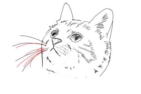 簡単イラストの描き方-子猫の書き方26