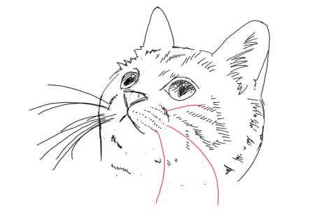 簡単イラストの描き方-子猫の書き方27