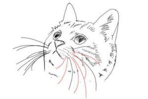 簡単イラストの描き方-子猫の書き方28