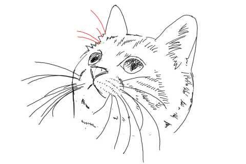 簡単イラストの描き方-子猫の書き方29