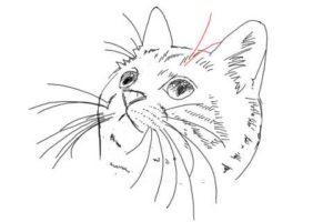 簡単イラストの描き方-子猫の書き方30