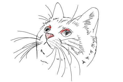 簡単イラストの描き方-子猫の書き方31