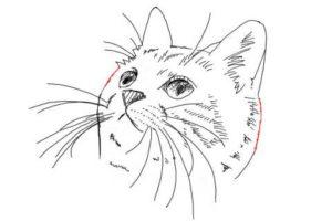 簡単イラストの描き方-子猫の書き方32