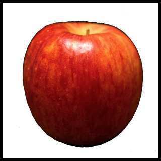 リアルな絵の描き方-リンゴを紙に描くときの大きさ中