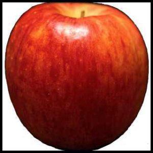 リアルな絵の描き方-リンゴを紙に描くときの大きさ大