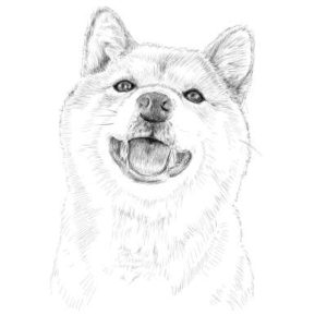 リアルな絵の描き方-柴犬のスケッチの書き方完成