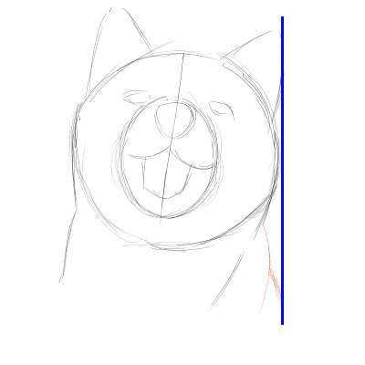 リアルな絵の描き方-柴犬のスケッチの書き方06-縦位置確認