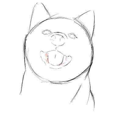リアルな絵の描き方-柴犬のスケッチの書き方12