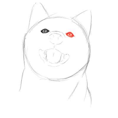 リアルな絵の描き方-柴犬のスケッチの書き方14
