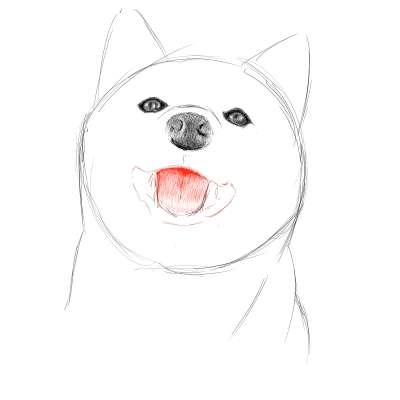 リアルな絵の描き方-柴犬のスケッチの書き方16