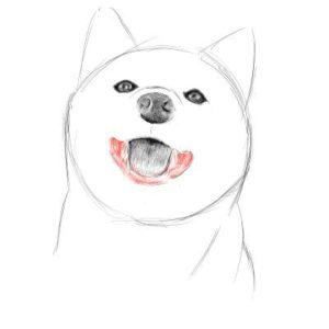 リアルな絵の描き方-柴犬のスケッチの書き方17