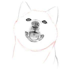 リアルな絵の描き方-柴犬のスケッチの書き方19