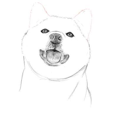 リアルな絵の描き方-柴犬のスケッチの書き方20
