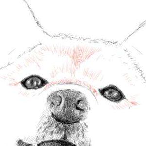リアルな絵の描き方-柴犬のスケッチの書き方21-拡大