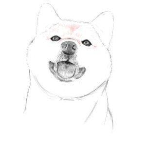 リアルな絵の描き方-柴犬のスケッチの書き方21