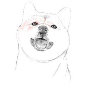 リアルな絵の描き方-柴犬のスケッチの書き方22