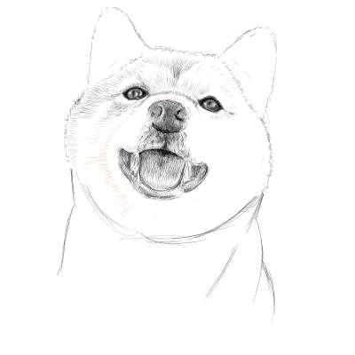 リアルな絵の描き方-柴犬のスケッチの書き方23