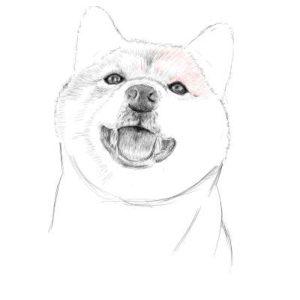 リアルな絵の描き方-柴犬のスケッチの書き方24