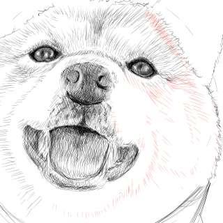 リアルな絵の描き方-柴犬のスケッチの書き方25-拡大