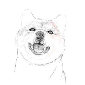 リアルな絵の描き方-柴犬のスケッチの書き方25