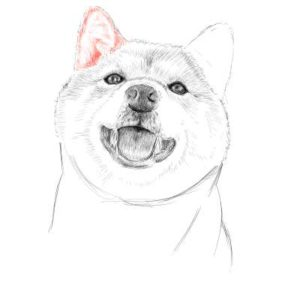 リアルな絵の描き方-柴犬のスケッチの書き方26
