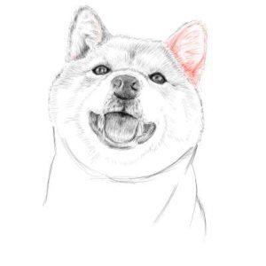 リアルな絵の描き方-柴犬のスケッチの書き方27