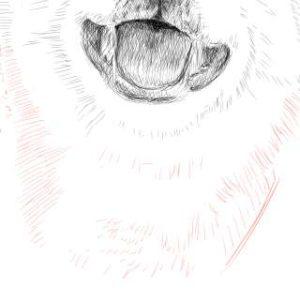 リアルな絵の描き方-柴犬のスケッチの書き方28-拡大