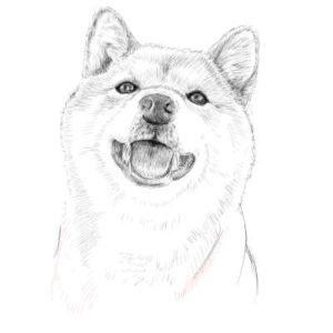 リアルな絵の描き方-柴犬のスケッチの書き方29