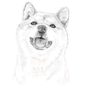 リアルな絵の描き方-柴犬のスケッチの書き方30